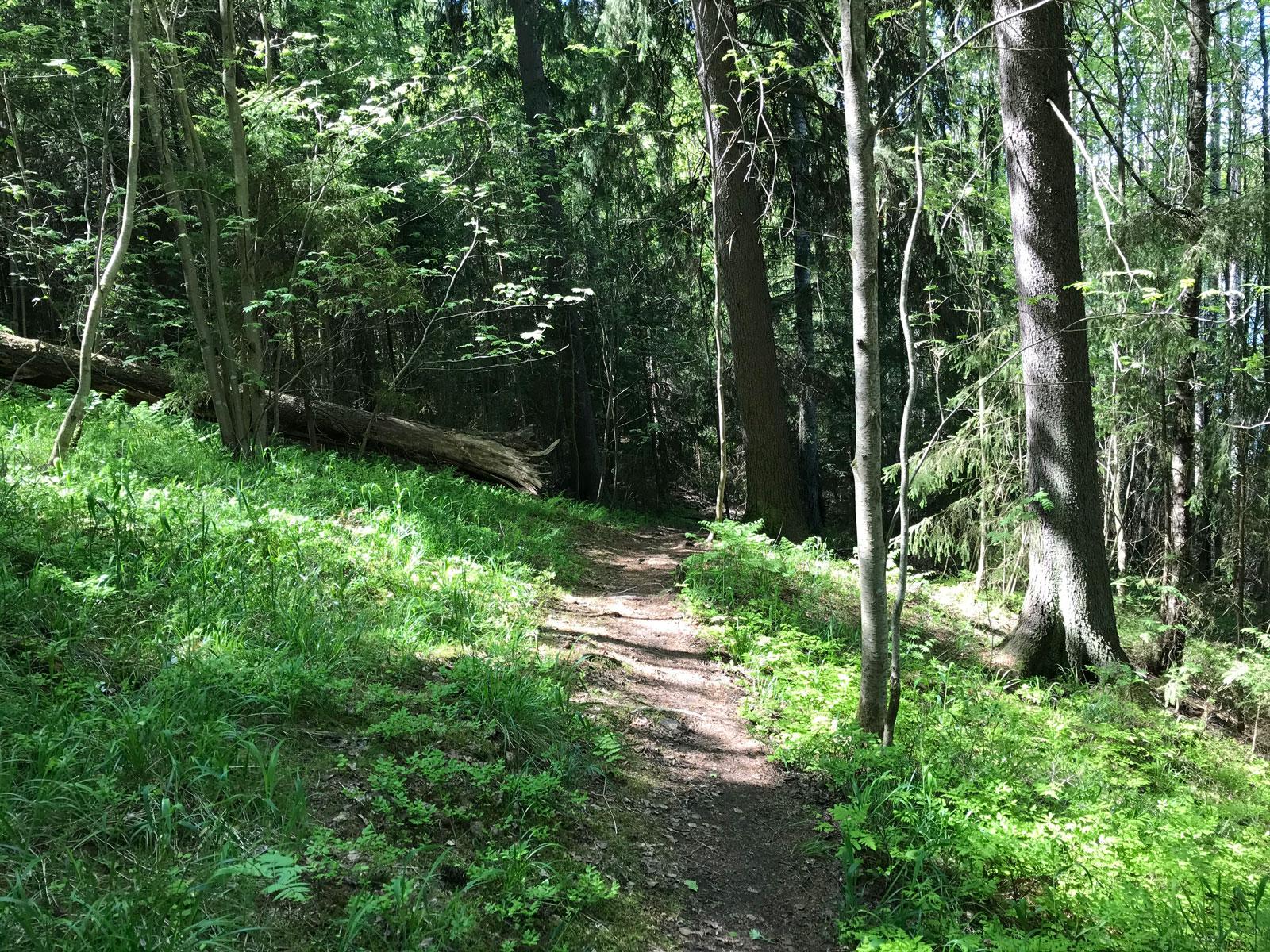 Tältä näyttää metsäpolku Koskenmäessä Nokialla