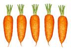 Porkkana #5